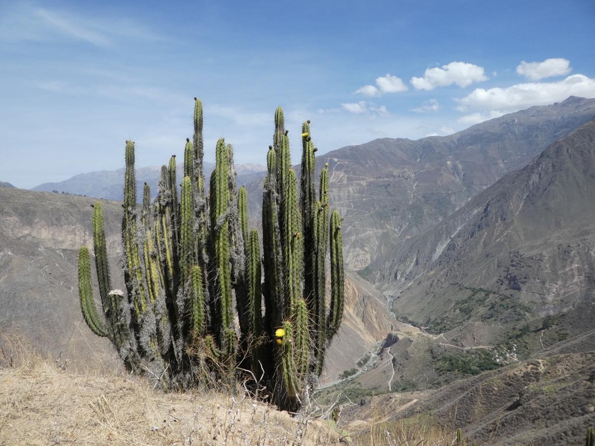 3-Tages-Trek im Colca-Canyon