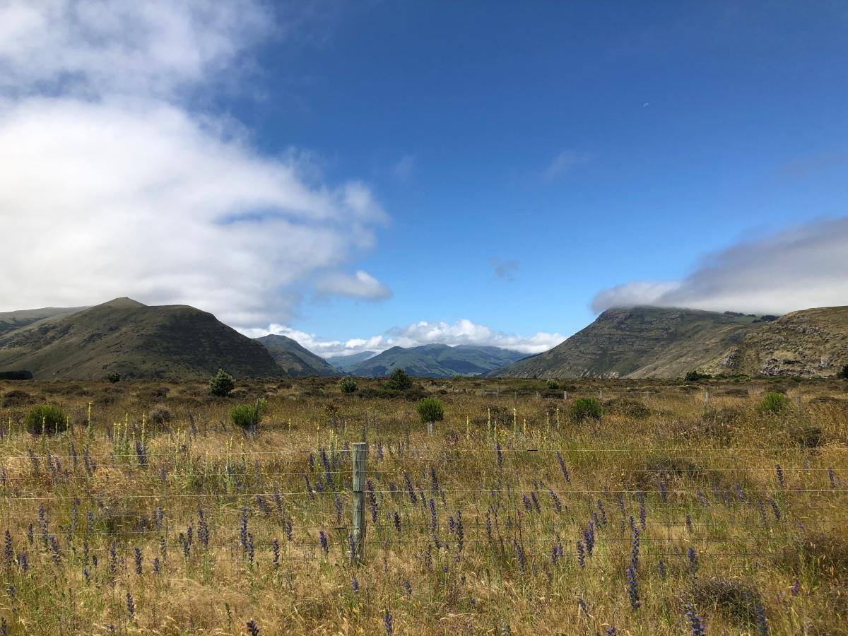 Little River Trail – von Christchurch nach LittleRiver