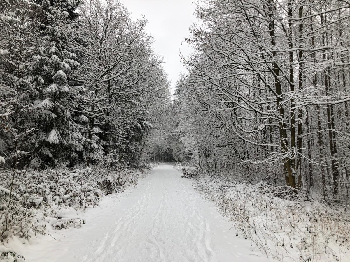 Winter in Freising – und 1 Jahr ohnePaddy